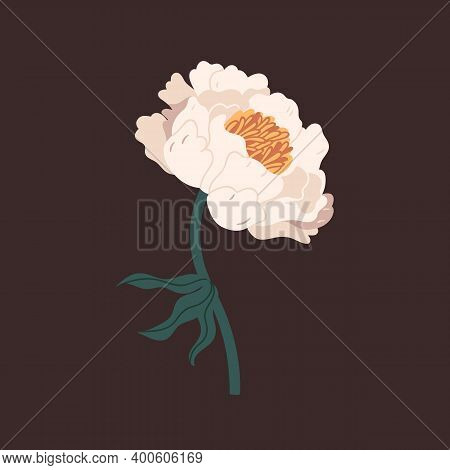Gorgeous White Peony With Tender Petals Vector Flat Illustration. Romantic Blooming Flower With Bud,