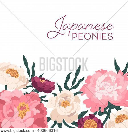 Elegant Japanese Peonies Background Vector Flat Illustration. Colorful Floral Spring Backdrop With A