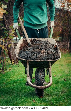 Young Man In A Village Drives A Wheelbarrow Full Of Manure To His Patch, Where He Uses It For Improv