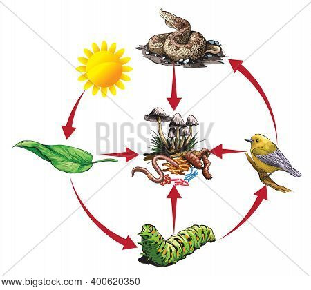 Illustrated Example Of Food Chain: Levaes - Caterpillar - Bird - Snake.