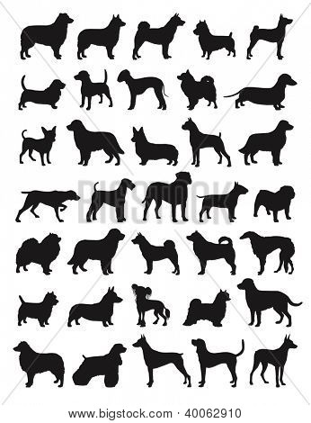 Many dog species in silhouettes
