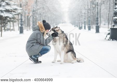 Alaskan Malamute Looking At Each Other With Woman In Winter City.