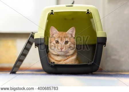 Foxy Red-headed Cat Inside Plastic Carrier Box, Travel With Cat, Cat Sits Inside Pet Carrier.