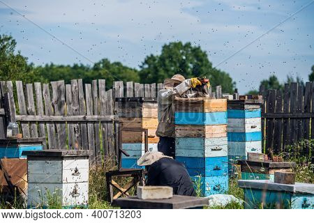 Beekeeping, An Elderly Man In Protective Outfit Fumigates Bees Removes Honeycombs From Hives To Chec
