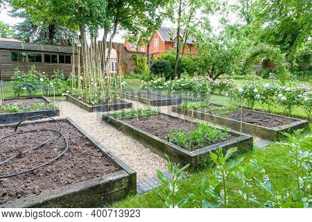 Vegetable Garden, Vegetables Growing In Raised Beds In A Large English Garden. England, Uk