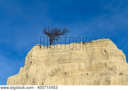 Separate alone tree on a top of limestone cliff against the blue sky at limestone quarry