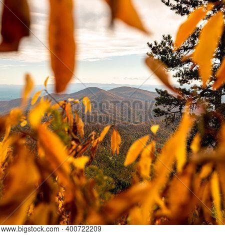 Mountain Ridge Framed Through Yellow Leaves Alongside Blue Ridge Parkway