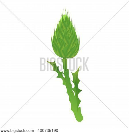 Thistle Scotland Plant Icon. Cartoon Of Thistle Scotland Plant Vector Icon For Web Design Isolated O