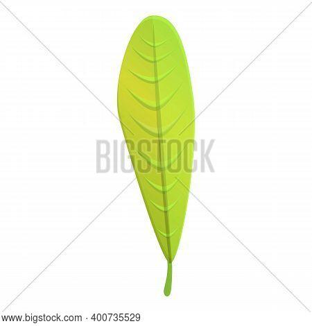 Plumeria Exotic Leaf Icon. Cartoon Of Plumeria Exotic Leaf Vector Icon For Web Design Isolated On Wh