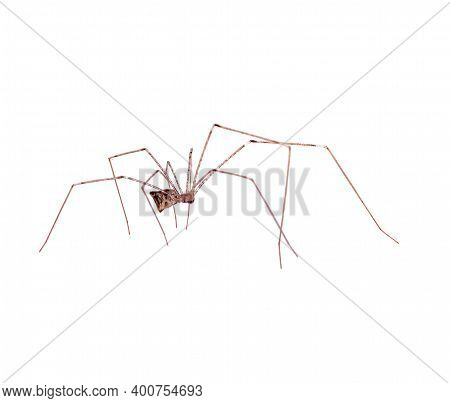 Predatory Spider An Isolated On A White