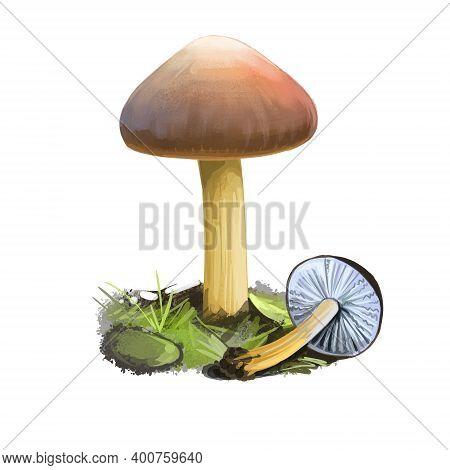Strobilurus Tenacellus Or Pinecone Cap Mushroom Closeup Digital Art Illustration. Aragic Fruit Bodie