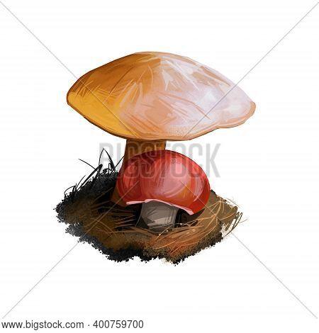 Suillus Bovinus, Jersey Cow Or Bovine Boletemushroom Closeup Digital Art Illustration. Boletus Has A