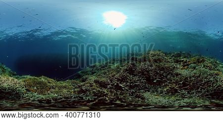 Tropical Colourful Underwater Seascape. Tropical Fishes And Coral Reef Underwater. Underwater Landsc