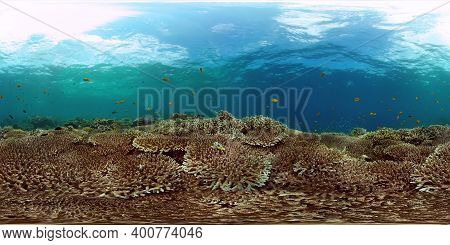 Beautiful Underwater Landscape With Tropical Fishes And Corals. Life Coral Reef. Reef Coral Garden U