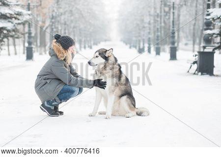 Woman Sitting With Alaskan Malamute In Winter City.