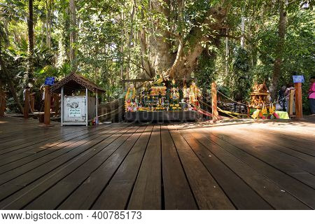 Udon Thani, Thailand-december 22, 2020: A Big Tree That People Believe Is Sacred And Come To Pray Fo
