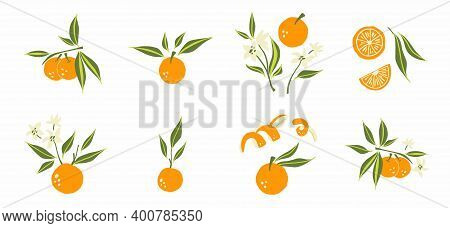 Oranges Set. Exotic Tropical Orange Citrus Fresh Fruit Composition, Whole Juicy Tangerine With Green