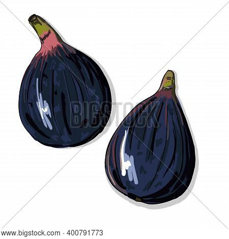 Vector Image Of Figs. A Quick Food Sketch Of The Fig Tree Harvest. Colored Drawing Of Sweet Healthy