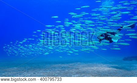 Beautiful Underwater Photo In Magical Blue Light Of A Scuba Diver And Schooling Fish. From A Scuba D