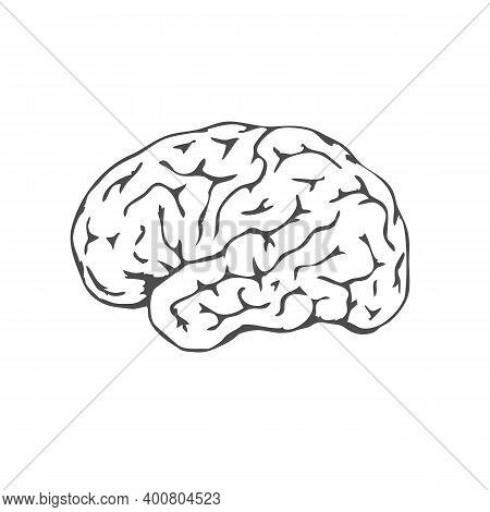 Black Human Brain Isolated On White Background. Human Brain Lateral View. Awareness Mental Health Mo