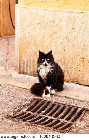 Cat On The Street. Street Cat Sitting On A Sidewalk, Close Up. Pet Animals. Domestic Animals. Cute L
