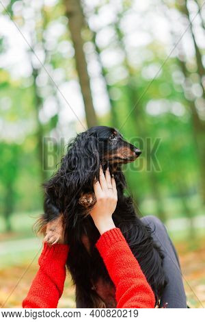 Young Attractive Woman Holding Her Dachshund Dog In Her Arms Outdoors In Sunrise In Park At Autumn
