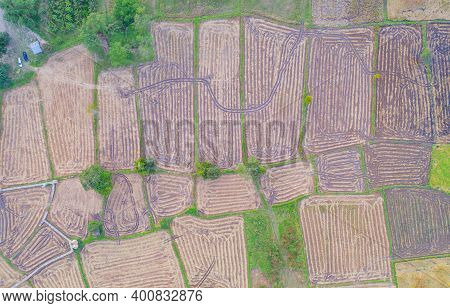 Aerial Top View Of Paddy Rice, Green Agricultural Fields In Countryside Or Rural Area. Grain For Har