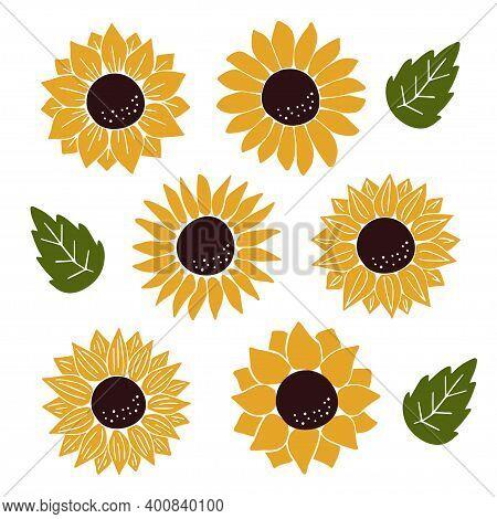 Vector Sunflowers Set Isolated On White Background. Hand Drawn Flat Sunflower Illustration. Summer F