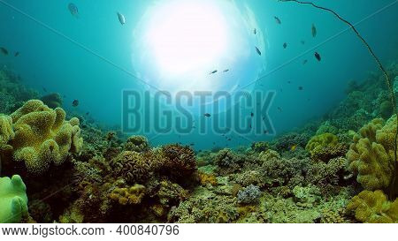 Tropical Fishes On Coral Reef, Underwater Scene. Colourful Tropical Coral Reef. Scene Reef. Philippi
