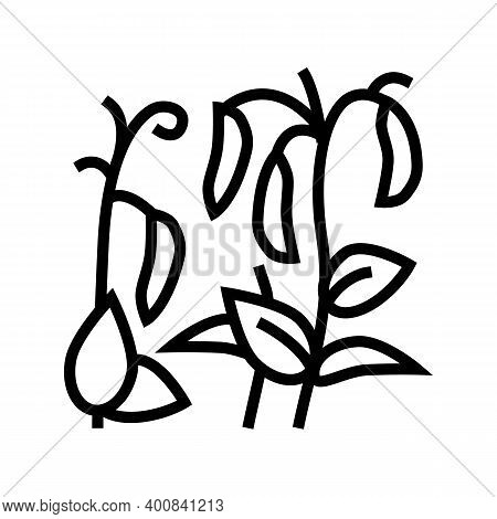 Plant Peas Line Icon Vector. Plant Peas Sign. Isolated Contour Symbol Black Illustration