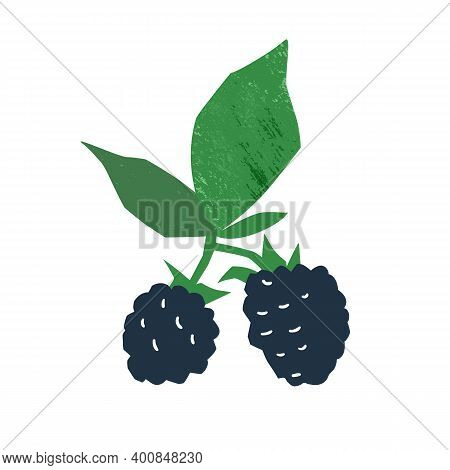 Fresh Juicy Blackberry Vector Flat Illustration. Hand Drawn Edible Berries With Stem And Leaves Isol