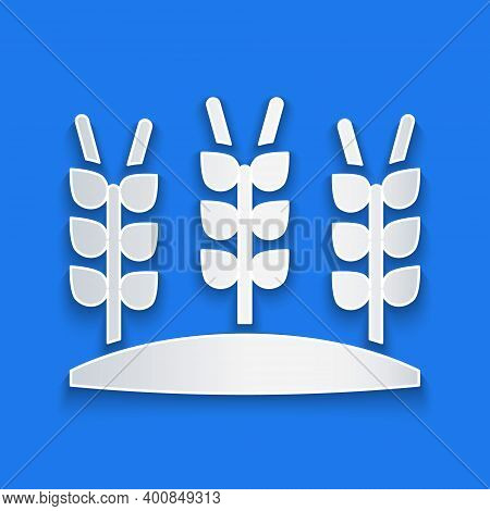 Paper Cut Cereals Set With Rice, Wheat, Corn, Oats, Rye, Barley Icon Isolated On Blue Background. Ea