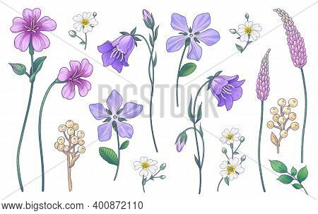 Hand Drawn Colorful Wildflowers Isolated On White Background. Pink, Purple, Lilac Flowers And Differ