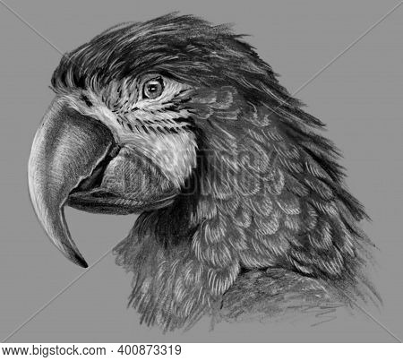 Monochrome Parrot Isolated On Gray Background. Hand Drawing Sketch Detailed Pencil Drawing