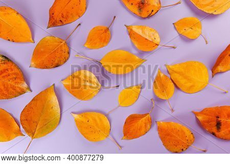 Orange Coloured Autumn Leaves On Lilac Board, Closeup Top Down View