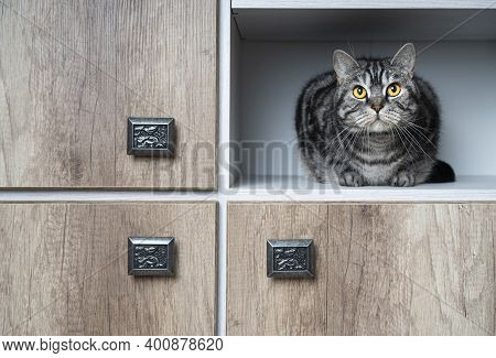 Funny Pets. Cat Sitting In The Closet. Closeup Portrait. Cats Love To Hide In Secluded Places. Find
