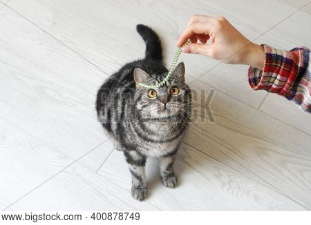 Playful Cat Ready To Play With A Toy