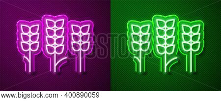 Glowing Neon Line Cereals Set With Rice, Wheat, Corn, Oats, Rye, Barley Icon Isolated On Purple And
