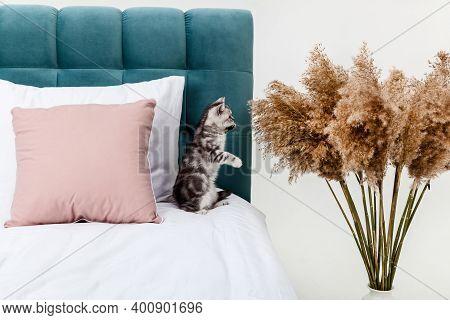 Small Tabby Scottish Fold Kitten On The Bed