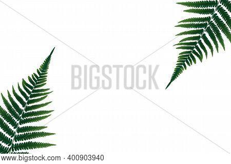 Colored Fern Leaf Vector Background Illustration. Eps10