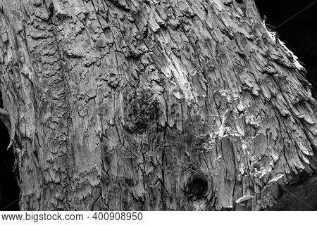 Splintering Dry Wood In Black And White
