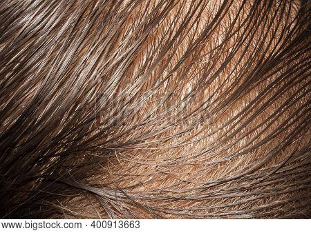 Wet, Combed Hair.dark-haired Background.sparse Brown Hair Of Men.