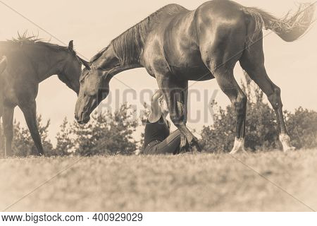 Animal And Human Love, Equine Concept. Jockey Woman Sitting Relaxing With Horses On Meadow