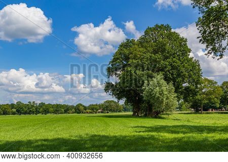 Highly Cultivated Agricultural Grassland With Abig Old Tree And A Farm In The Background. Farmland W