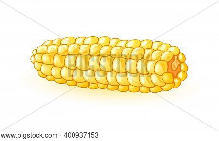 Noggin Of Mellow Maize, Agriculture And Vegetarianism, Juicy Vegetable. Vector Sweet Corn Grains Har