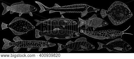 Set Of Sea And River Fish Hand Drawn. White Contour Of Different Fish On Black Background, Collectio