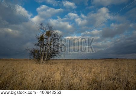 Trees Growing On Dry Meadows With Tall Grasses
