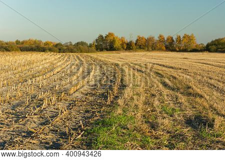 Harvest Stubble In A Cornfield, Autumn Trees And Sky