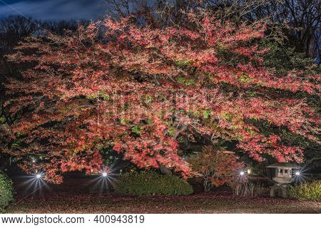 Tokyo, Japan - December 09 2020: Autumn Lightup Of A Stone Lantern Under A Red Maple Momiji In The G