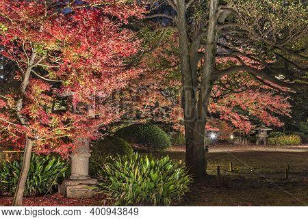Tokyo, Japan - December 09 2020: Autumn Night Lighup Of A Stone Kasuga Lantern Under A Red Maple Mom